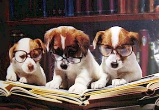 Bookish Dogs via Love at First Book