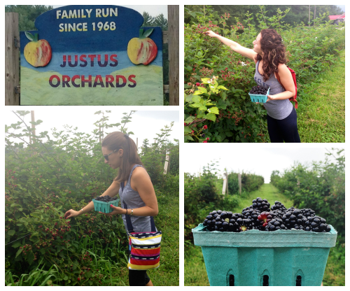 "My sister & I ""foraging"" for blackberries at a u-pick in North Carolina - one of our favorite parts of the road trip!"